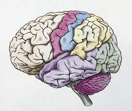 drawing of a brain