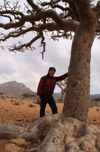 Gary Young investigating the socotrana species of frankincense on the island of Socotra