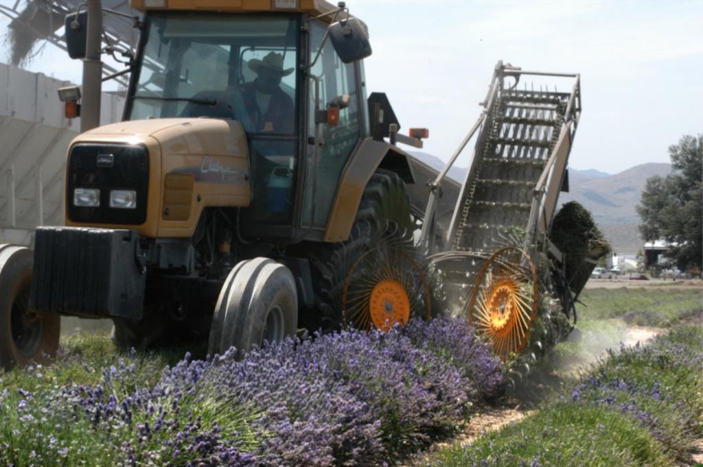 The custom lavender harvester that Gary built.