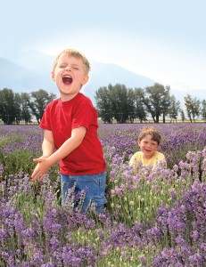 boys playing in lavender field