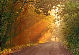 light streaming through trees
