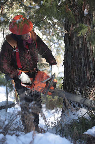 Gary Young cutting fir trees with chainsaw