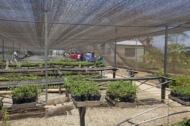 This is one of the Young Living nurseries in Ecuador, where new plant species can be studied, and pest resistance and weed control can be monitored.