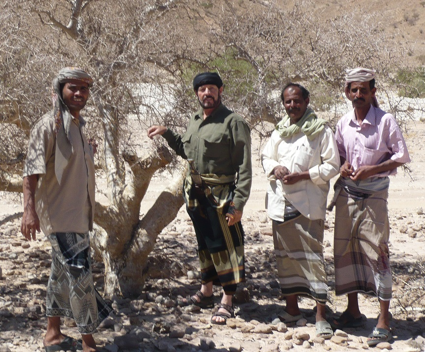 In the interior of Yemen researching areas where the myrrh tree can be found. The best myrrh was located on Socotra Island, where Young Living's Sweet Myrrh comes from.