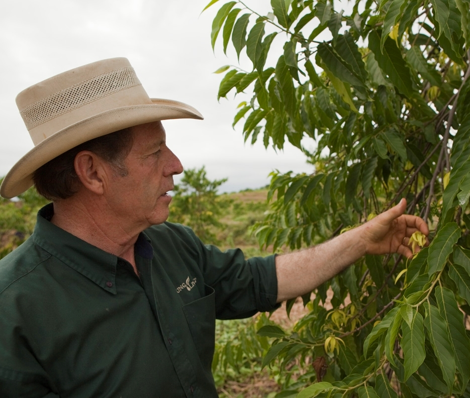 Gary is checking the fragrant flowers on ylang ylang trees grown on the Young Living farm in Ecuador, which will be distilled immediately after being picked.