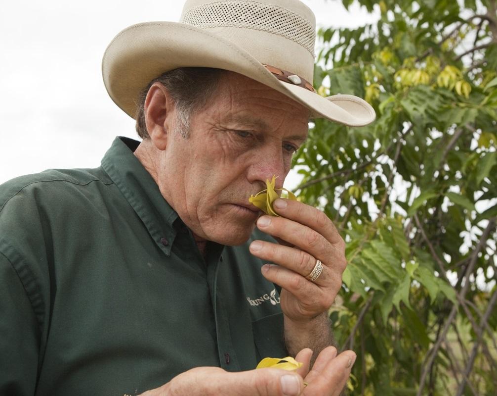Just prior to harvesting, Gary checks the fragrance of his ylang ylang plants on the YL Ecuador Farm.