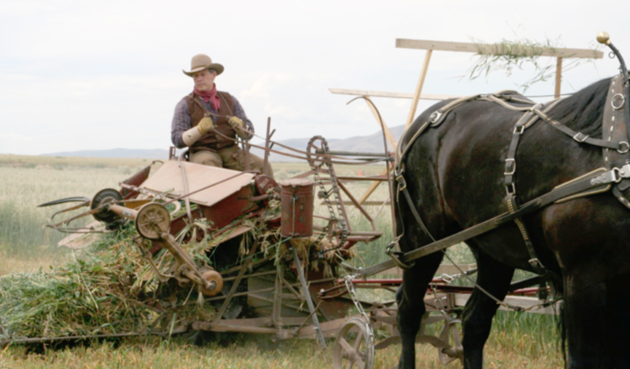 This photo was taken at the Young Living farm in Mona, Utah, showing Gary harvesting oats the old-fashioned way.
