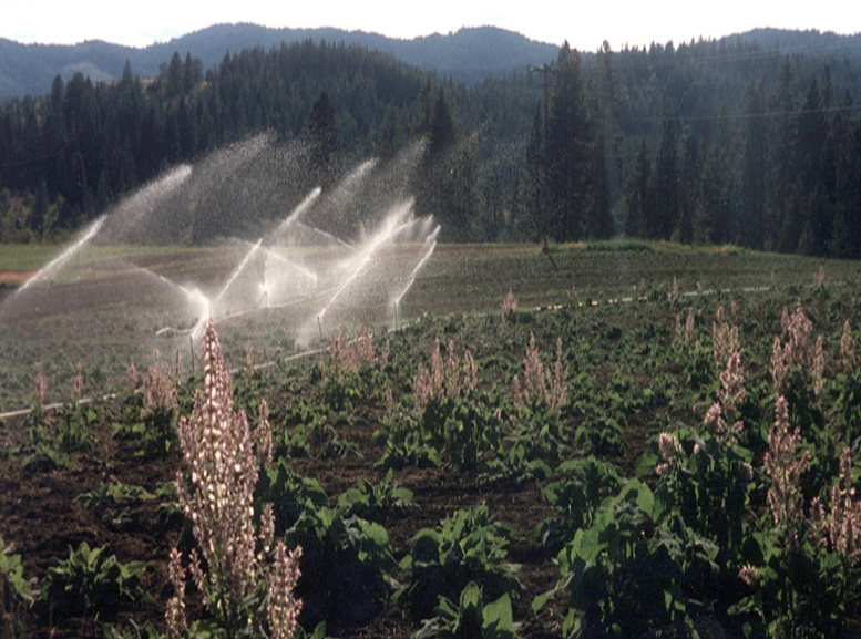 Gary said he would build an irrigation system to water his fields of clary sage powered by a 5-horsepower motor. Sprinkler experts scoffed saying it couldn't be done. Don't ever say that to Gary! Here is the finished system!