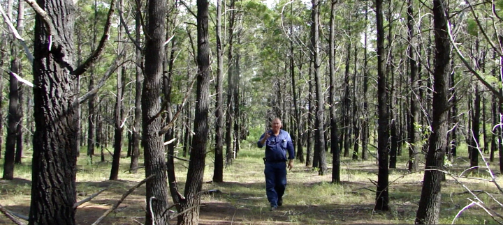 This is the first blue cypress to be sustainably produced in Australia. The essential oil is known for its ultra-high frequency.