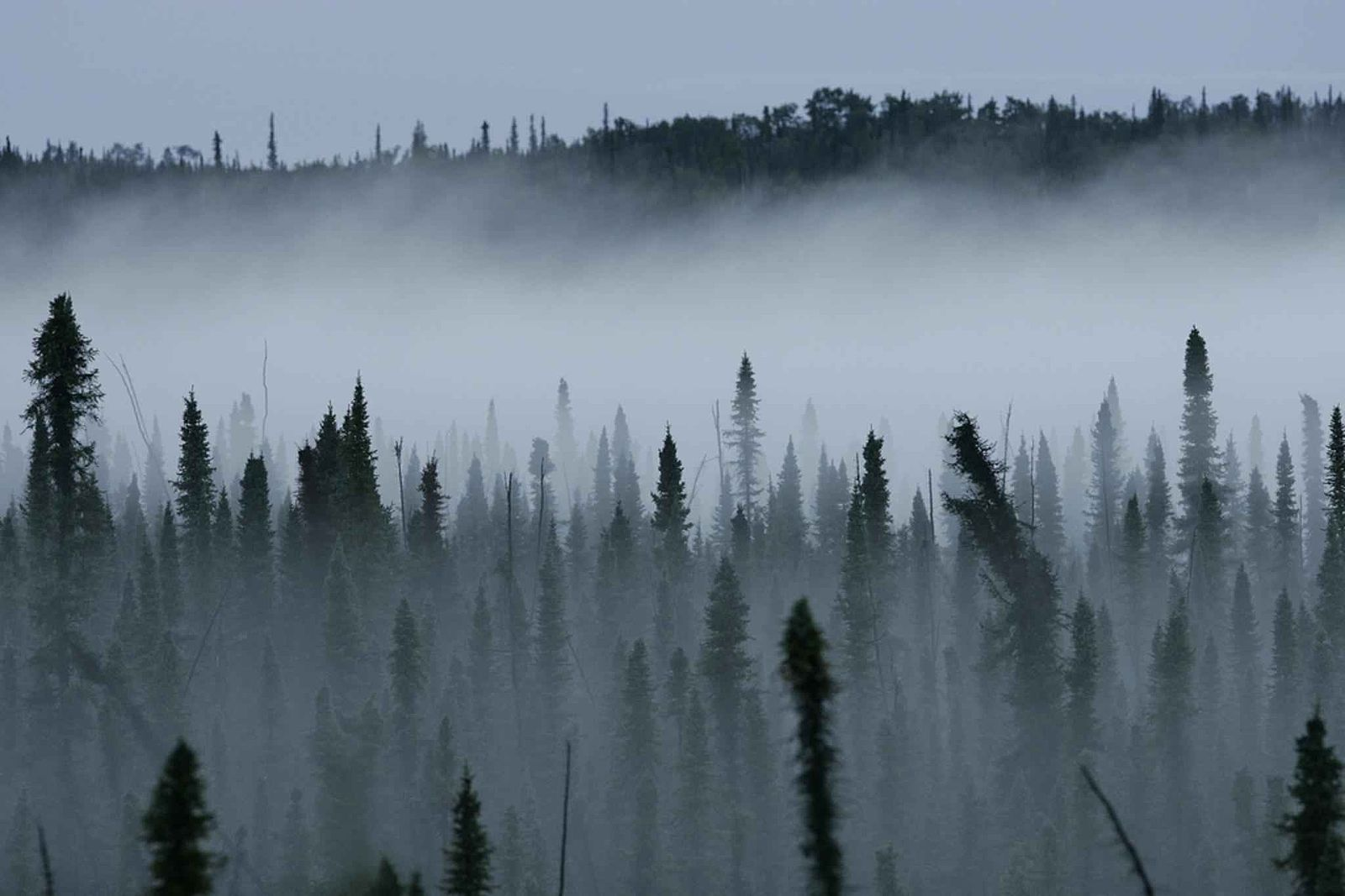 A_mist_rises_from_a_black_spruce_forest wiki commons