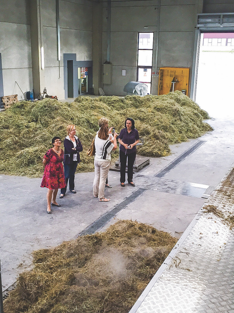Members from all over Europe visit the new distillery in Croatia during a helichrysum harvest.