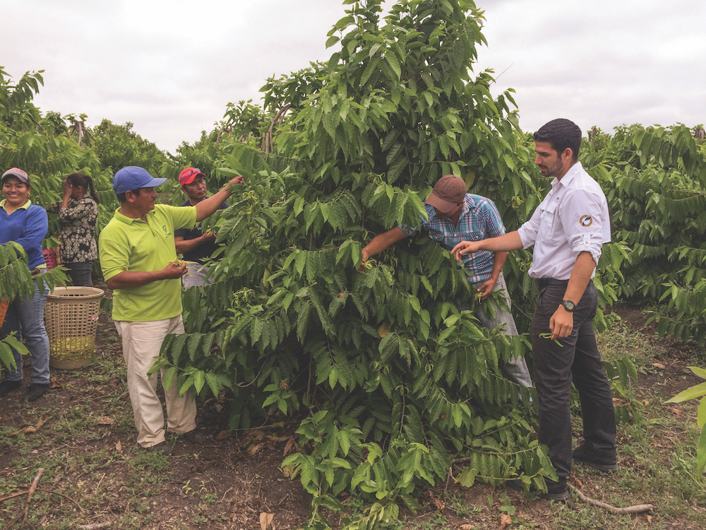 Folliowing the ylang ylang harvest with Nicolas the farm manager on right.