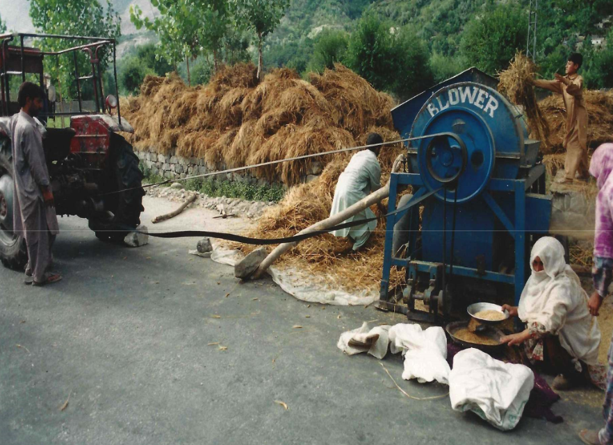 Pakistani einkorn threshing