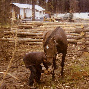 Canadian Logging
