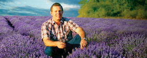 A middle-aged man sits in a field of lavender plants.