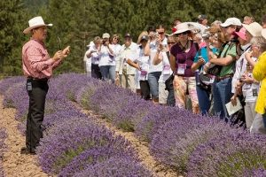 Gary Young teaching people about lavender in the fields
